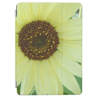 Soft Yellow Sunflower
