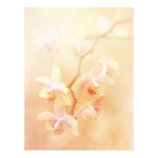 Softly Faded Orchids Postcard