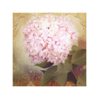 Softly Summer 2 Vintage Pink Hydrangea Blossom Canvas Print