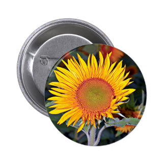 Solar energy of the sunflower 2 inch round button
