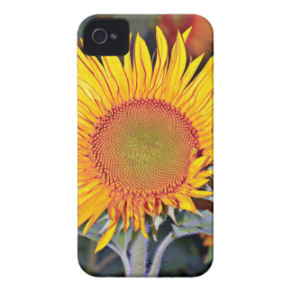 Solar energy of the sunflower Case-Mate iPhone 4 case