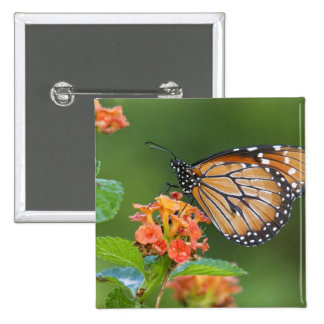 Soldier (Danaus eresimus) butterfly feeding on 2 Inch Square Button