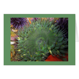 Solitary Green Anemone Card