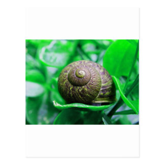 Solitude (aka 'Green Snail') Postcard