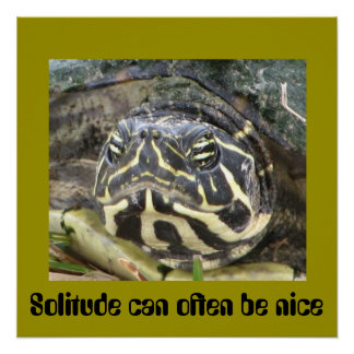 Solitude Can Often Be Nice - Turtle Poster
