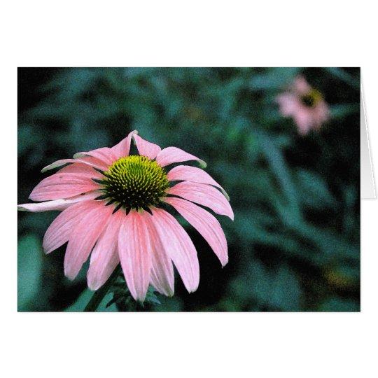Solo Echinacea Card