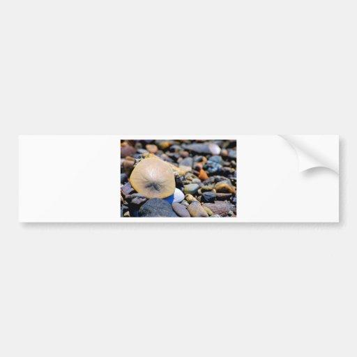 Solo Sand Dollar Bumper Stickers