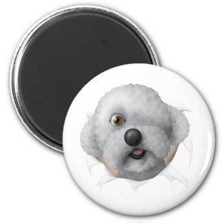 solomon chestburster 2 inch round magnet