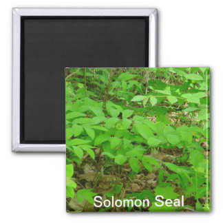 Solomon Seal Magnet