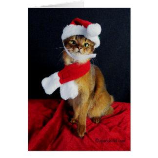Somali Cat Holiday Greeting Card