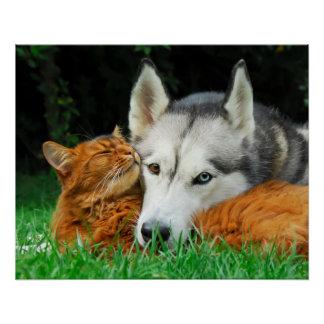 Somali Cat Siberian Husky Cute Friends Huddle Love Poster