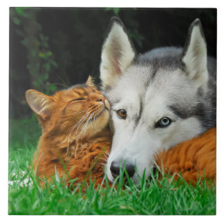 Somali Cat Siberian Husky Cute Friends Huddle Love Tile