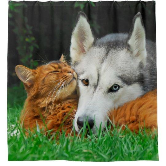 Somali cat Siberian Husky cute friends huddle -Tub