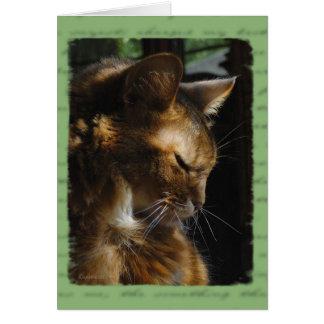 Somali Cat Sympathy Card