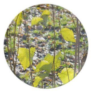 Some autumn green leaves dinner plate