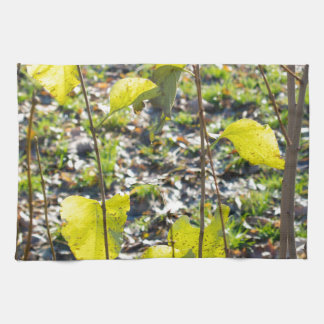 Some autumn green leaves towels
