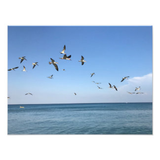 some awesome birds at the beach photo print