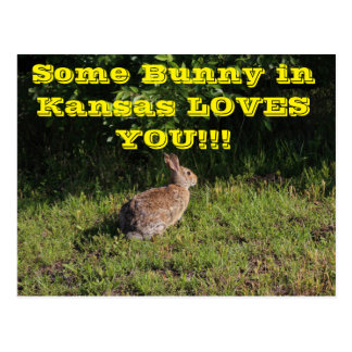 Some Bunny in Kansas Loves You Post Card