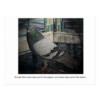 Some Days You're the Pigeon Postcard