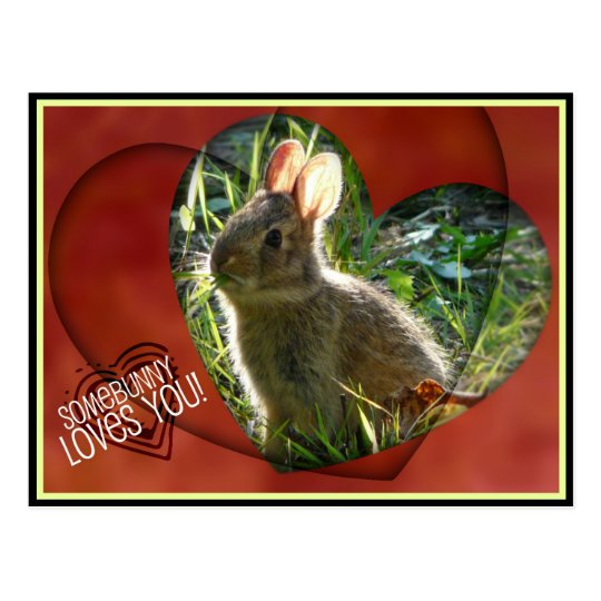 Somebunny Loves You! Bunny Photograph Postcard