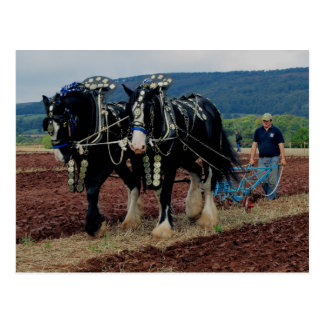 Somerset Uk Horse Ploughing Championships 2011 Postcard