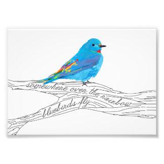 Somewhere over the Rainbow Bluebird Print Photograph