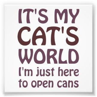 Son mon monde de chats - j'ouvre juste des boîtes photographes