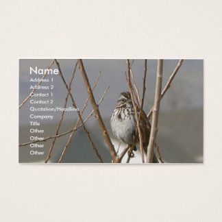 Song Sparrow Business Card