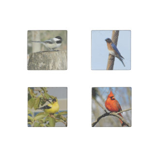 Songbirds Marble Magnets