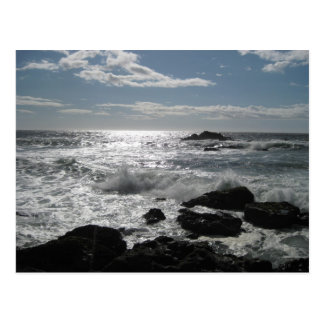 Sonoma Coast, Bodega, Ca. Blank Postcard