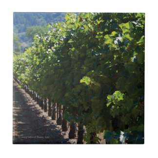 Sonoma County Vineyard - Ceramic Tile