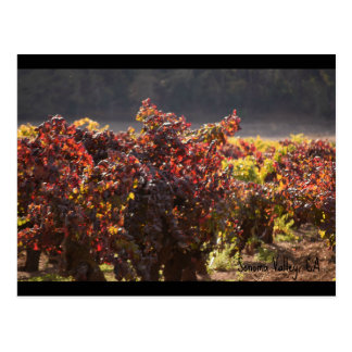 Sonoma Valley - Zinfandel Postcard