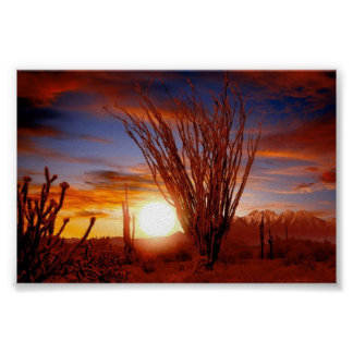 Sonora Desert, Arizona Poster