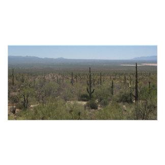 Sonora Desert Museum Card