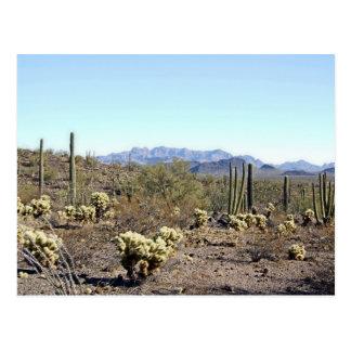 Sonoran Desert scene 04 Postcard