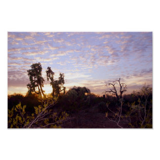 Sonoran Sunset Poster
