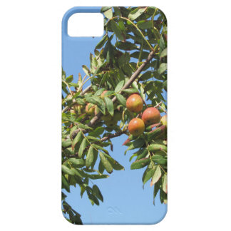 Sorbs in fruit tree . Tuscany, Italy Case For The iPhone 5
