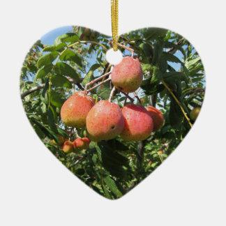 Sorbs in fruit tree . Tuscany, Italy Ceramic Heart Ornament