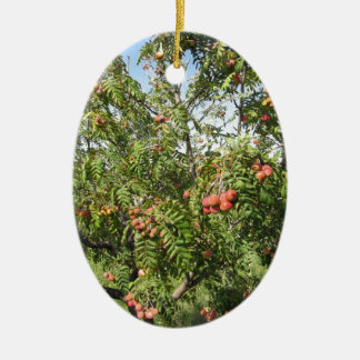 Sorbs in fruit tree . Tuscany, Italy Ceramic Oval Ornament