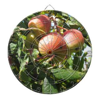 Sorbs in fruit tree . Tuscany, Italy Dart Board