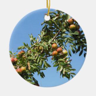 Sorbs in fruit tree . Tuscany, Italy Round Ceramic Ornament