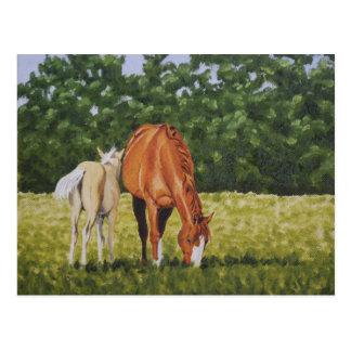 Sorrel and Palomino Foal Postcard