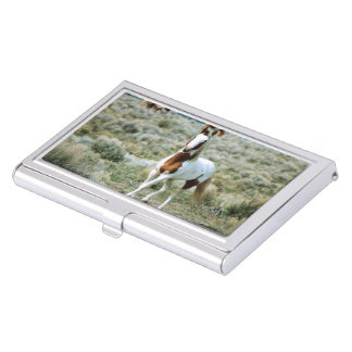 Sorrel Tovero Paint Horse Business Card Holder