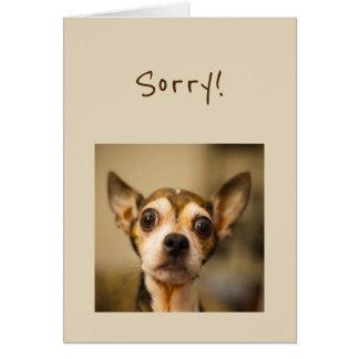 Sorry Fun Chihuahua Dog Card