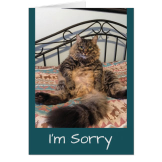 Sorry Too Cute Not To Forgive Kimber Cat Card
