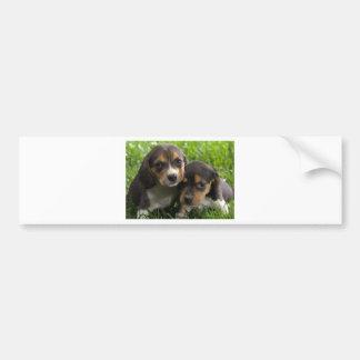Soulful Eyes Dachshund Puppies Bumper Sticker