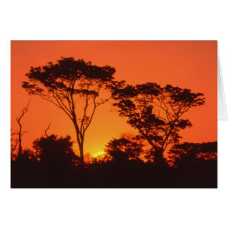 South Africa.  African sunset. Card