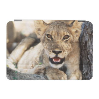 South Africa, Kalahari Gemsbok National Park 4 iPad Mini Cover