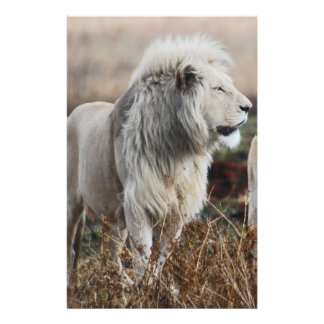 South Africa Lion as king Stationery