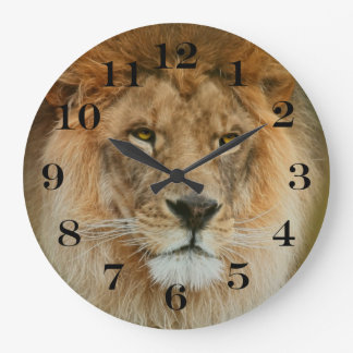 South Africa Majestic Lion Close up Large Clock
